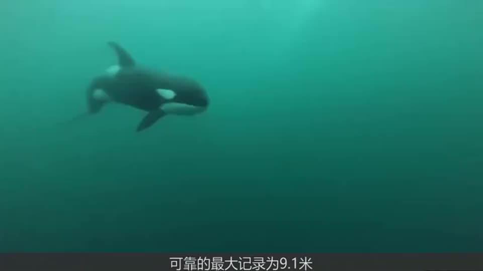 萌娃去海洋馆玩,意外遇上两头虎鲸给他打招呼,画面太和谐了!