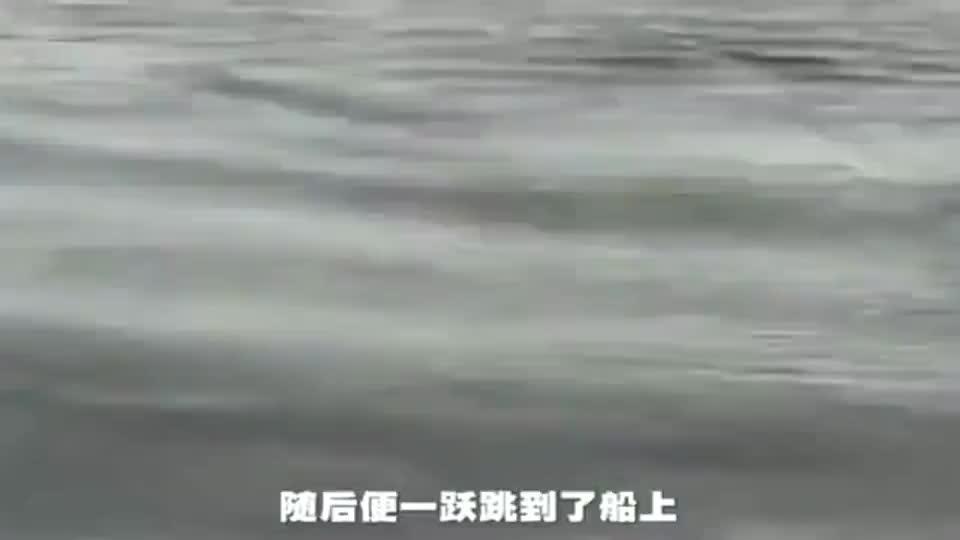 虎鲸捕食小企鹅,因求生欲跳上了渔船,还朝虎鲸吐水挑衅