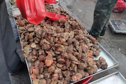 青岛早市开始营业,物美价廉的海鲜琳琅满目,10块二斤最受欢迎