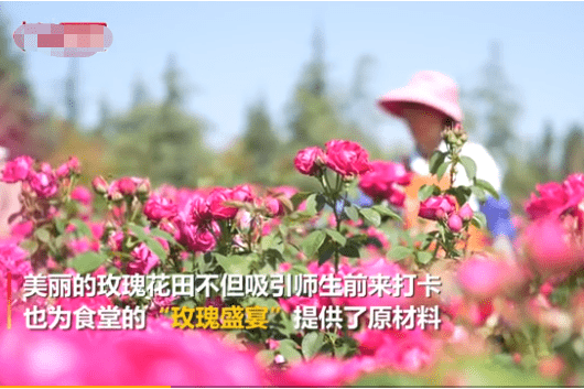 云南大学食堂推出玫瑰宴!别人的学校从没让我失望过……