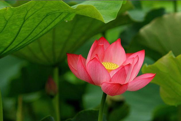 姜夔把四首名诗改编成了一首宋词,很高级,一般人只能看出两首!