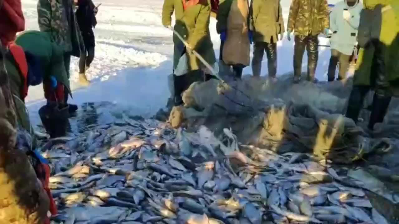 农村小哥实拍,查干湖冬捕,好多鱼像不要钱堆满地