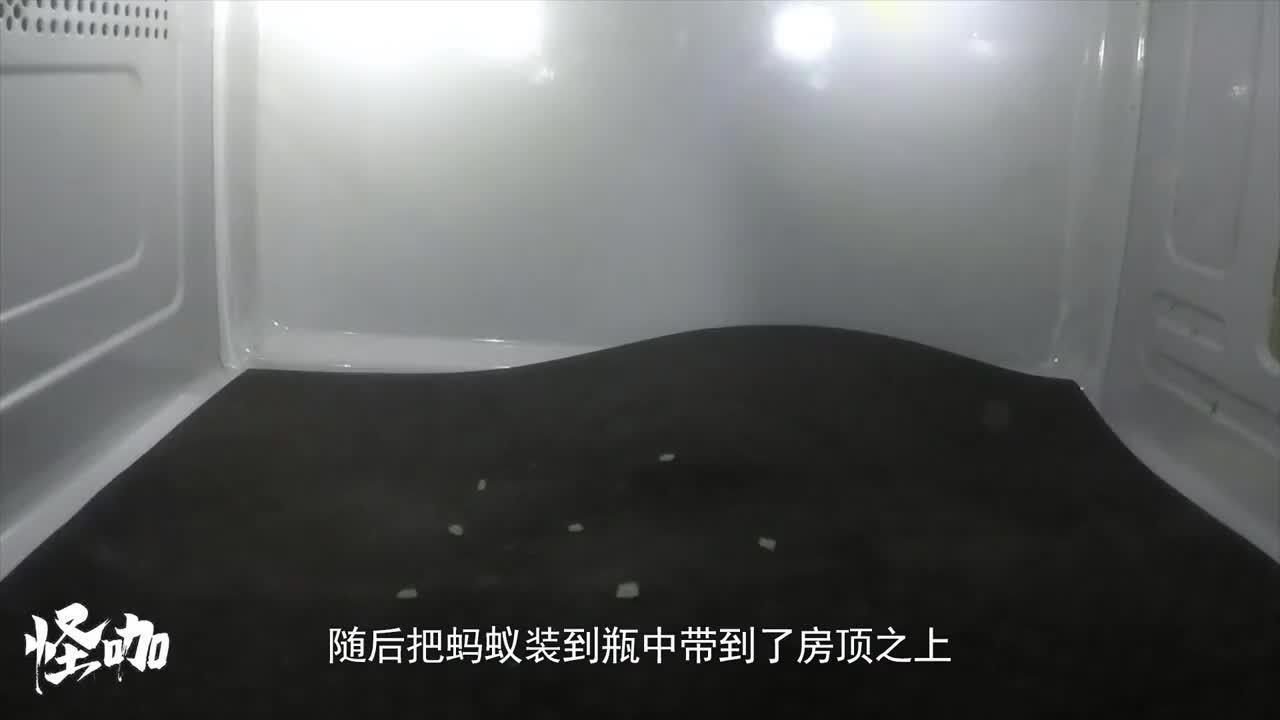 将蚂蚁从高空抛下会摔死吗看完高速相机记录过程涨知识了
