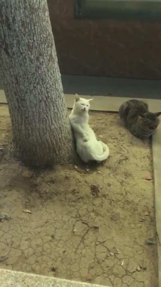 猫:最近患上风湿病了,皮肤痒的不行了!