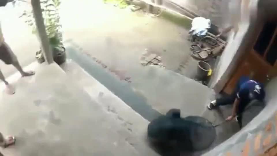 印度流浪狗泛滥成灾, 全城围捕真是绝了