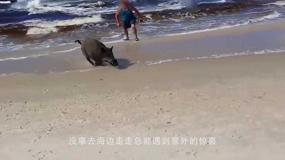 男子海滩捡到美丽生物,本想带回家收养,老渔民:赶紧放生