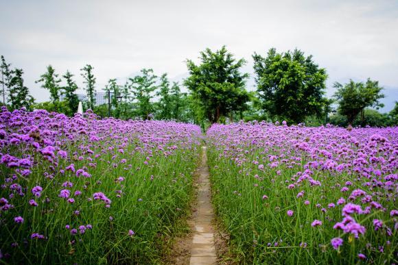 福州有一处风景绝佳之地,一年四季的景色完全不同,还不收取门票