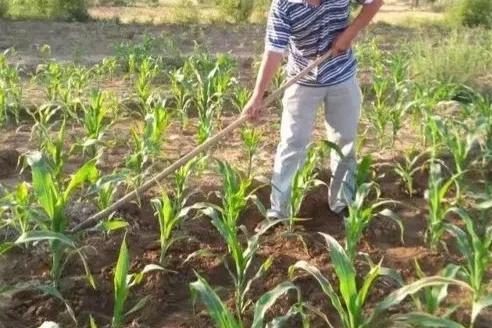 现在农村耕地每家每户一小块一小块的适合现代农业的发展吗?