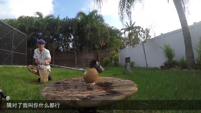 小伙将熔盐放进西瓜,实验开始的一瞬间,吓得直接跳起来!
