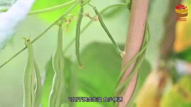 """扁豆和它是绝配,胜过吃无数""""清肺片"""",常吃呼吸更顺畅"""