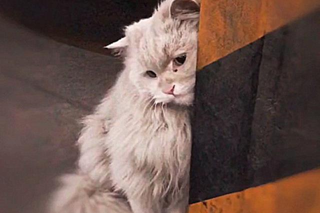 男子在车库发现只流浪猫,凑近看清后心疼了:这是落难的小公主吧