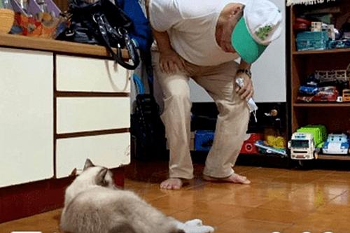 父亲特别抵制养猫,隔了段时间后却被打脸了:你咋这么可爱呢