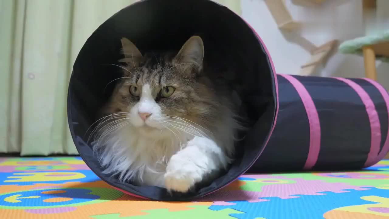 大胖猫爬进纸盒城堡中,悠闲的卡在里面,这么窄的空间不难受吗?