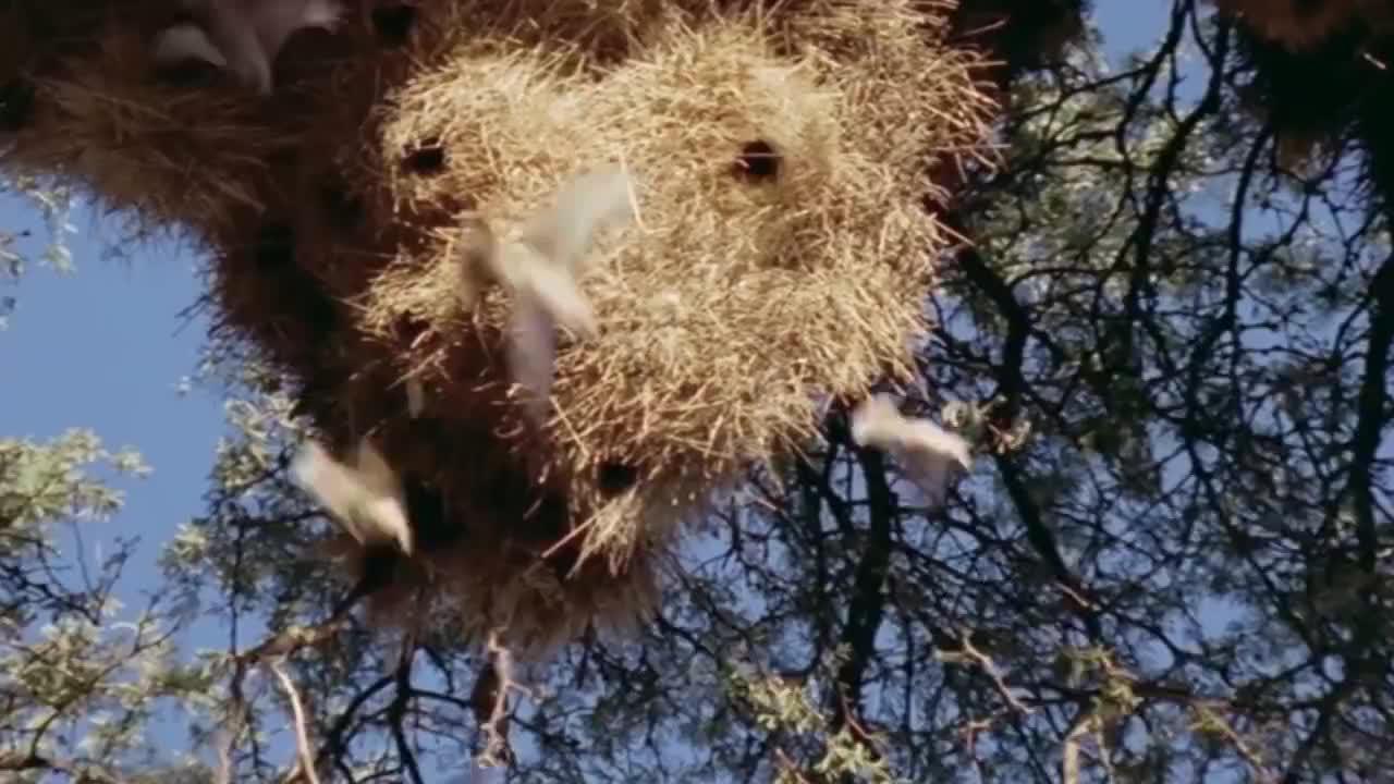 世界上最大的鸟巢,却从没有人敢爬上去!村民:去送死么?