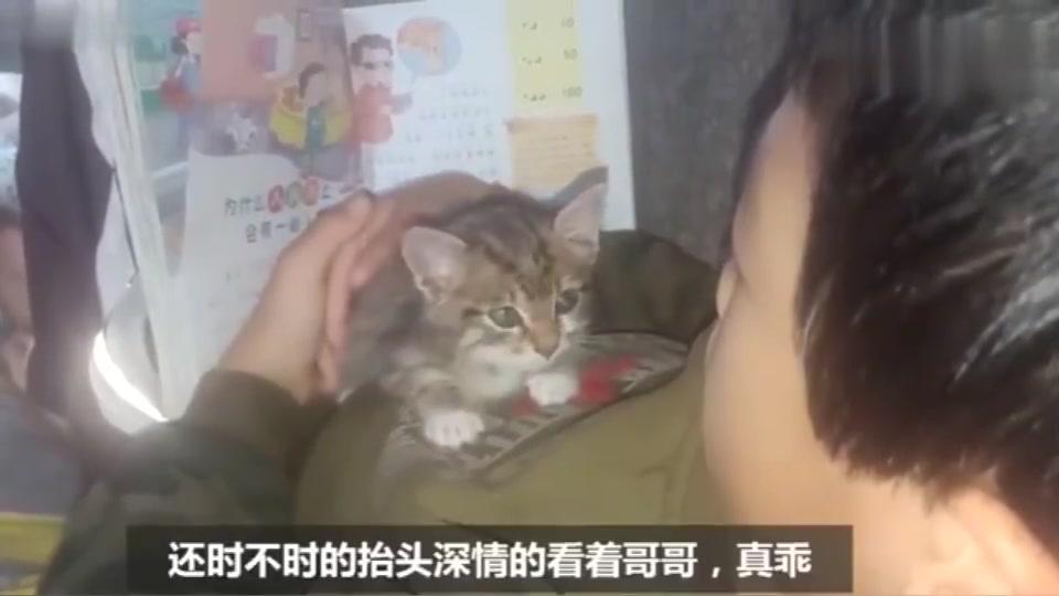 小流浪猫捡回来14天,陪小主人读书,还时不时深情的看着他