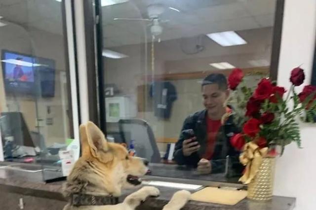 狗子来到警局报假警,当警察反应过来时,狗子已经到家了