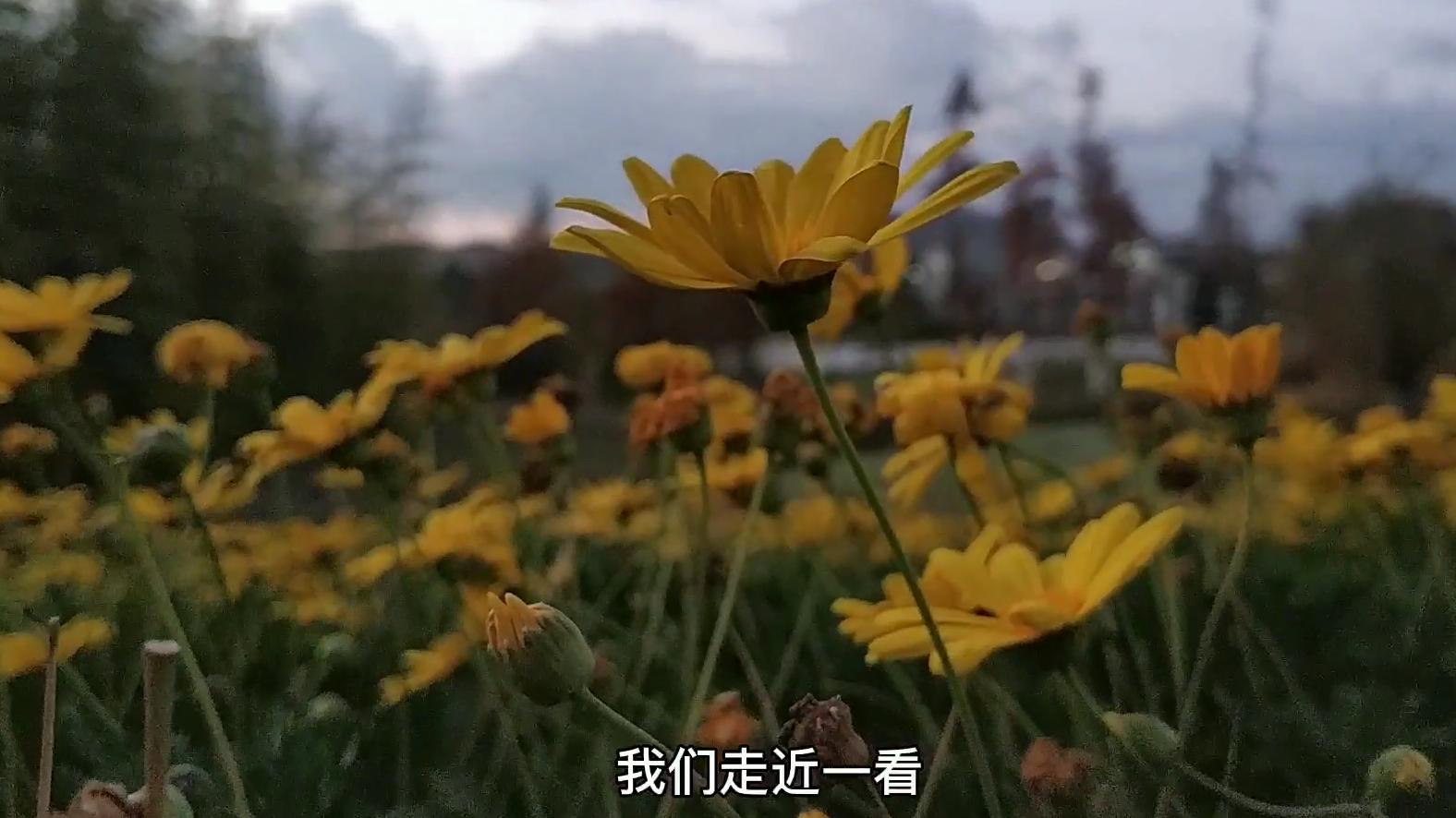 昆明这个公园非常适合退休老男人散步,微风拂面,杨柳依依!
