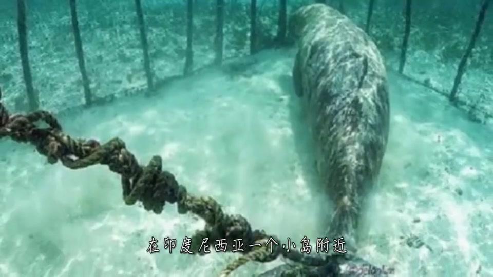"""男子潜水时意外发现,一只""""神秘生物""""被狠心关在海底的笼子里!"""