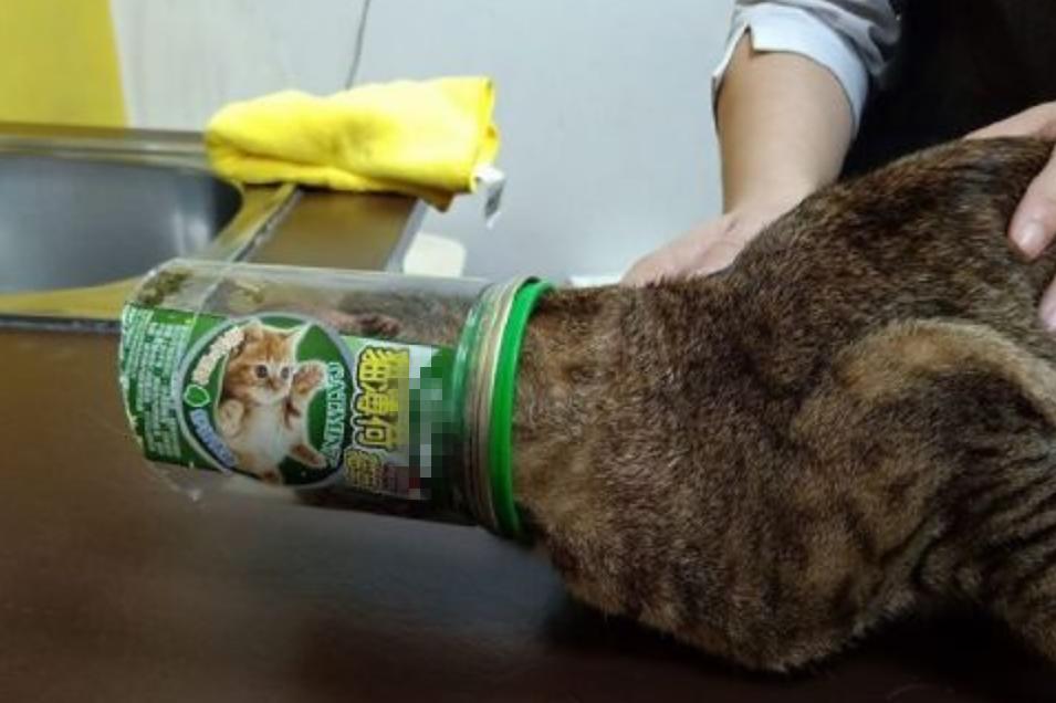 猫咪半夜被送去急诊,医生看后却憋不住笑了:这么上头的吗?