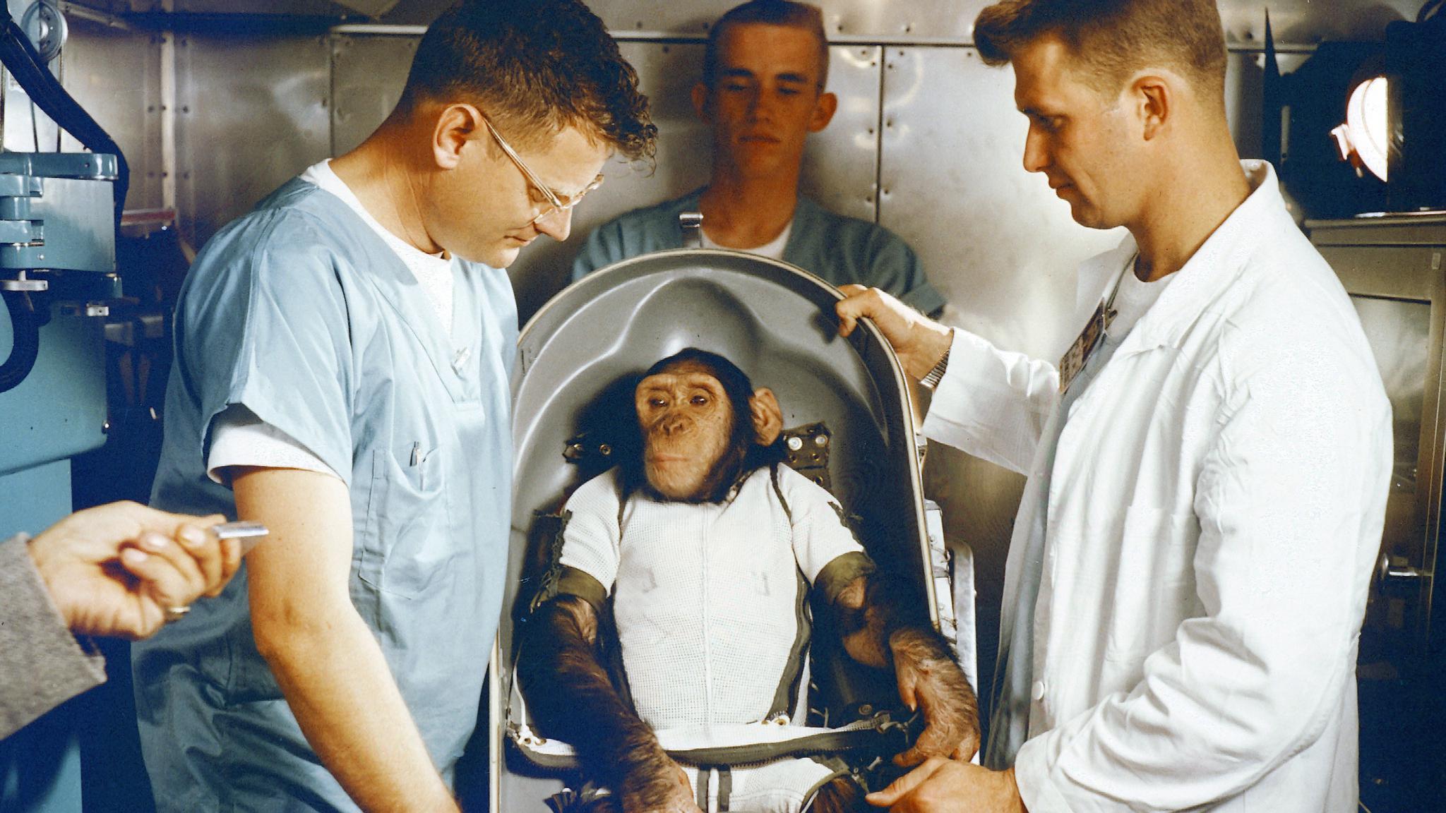 """早在50年前,人类将一只""""黑猩猩""""送上太空,如今它还活着吗?"""