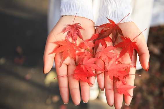 南京栖霞山枫叶红了,江南最美赏枫胜地,错过了再等一年