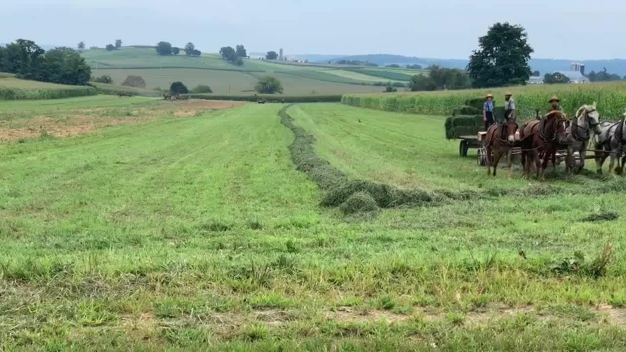 用马拉着机器处理草地,这农场主真是土豪,太奢侈了