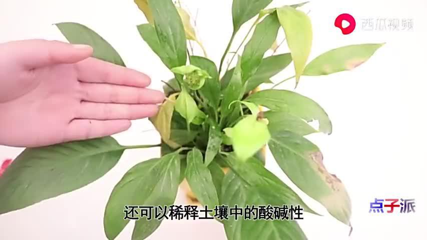 自从花盆里面撒把它,花草一年不烂根不生虫不黄叶,越长越茂盛