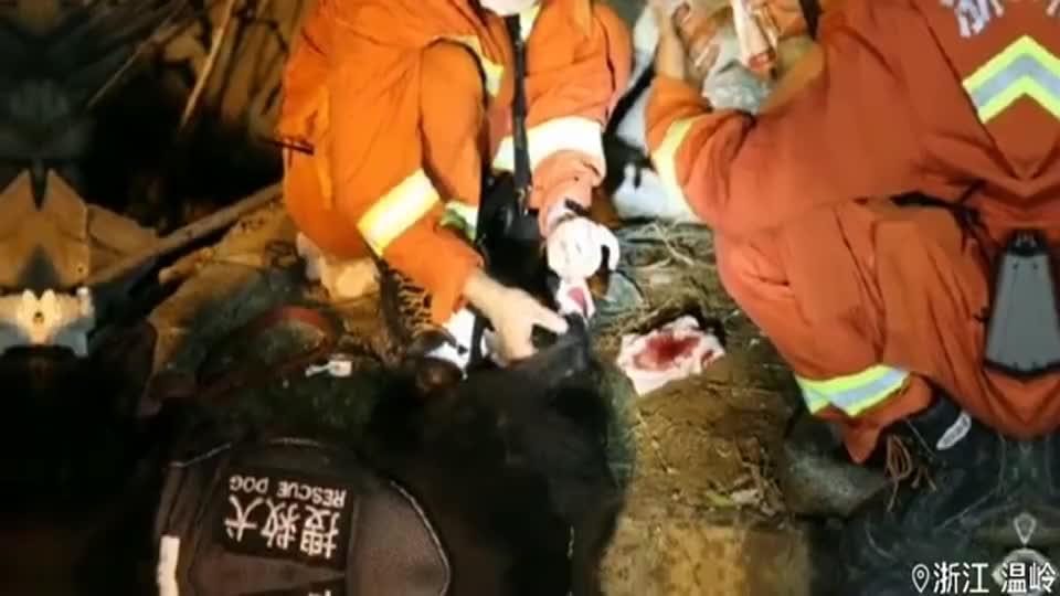 你们辛苦了!温岭槽罐车爆炸救援进行中,搜救犬受伤后依然坚持