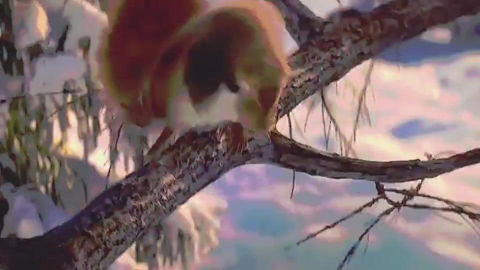 北极熊和松鼠:一个喷嚏引发的爱情