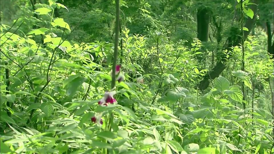 小庄为了摘花不慎滚下山坡昏倒,被救醒后急忙要回到原来的地方