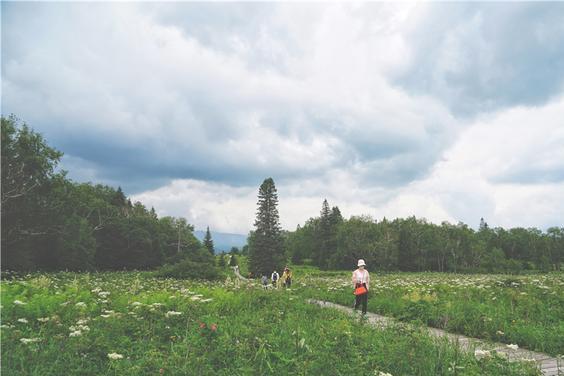 吉林长白山的小众秘境,一到夏天就美成了仙境,大部分游客没来过