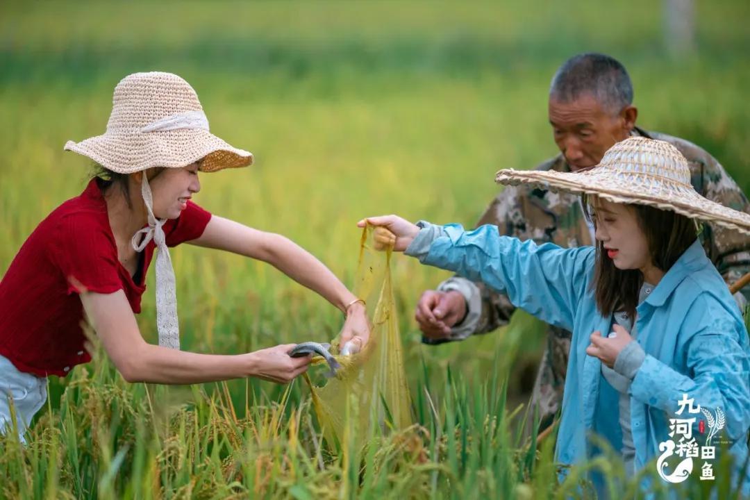 走,去丽江九河抓稻田鱼 全家老少一起下田的那种