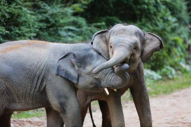 """大象吸水时不会被呛到,原来是因为这""""神奇开关""""......"""