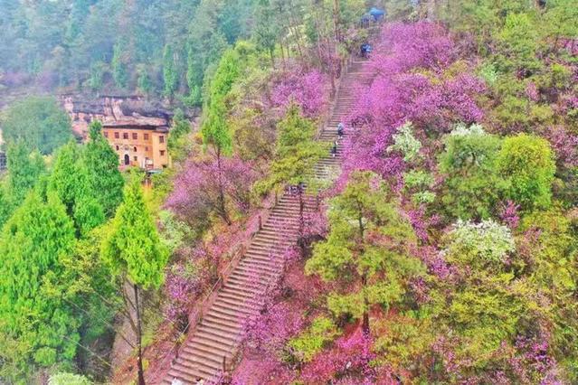 罗学成:紫荆花开赤城山