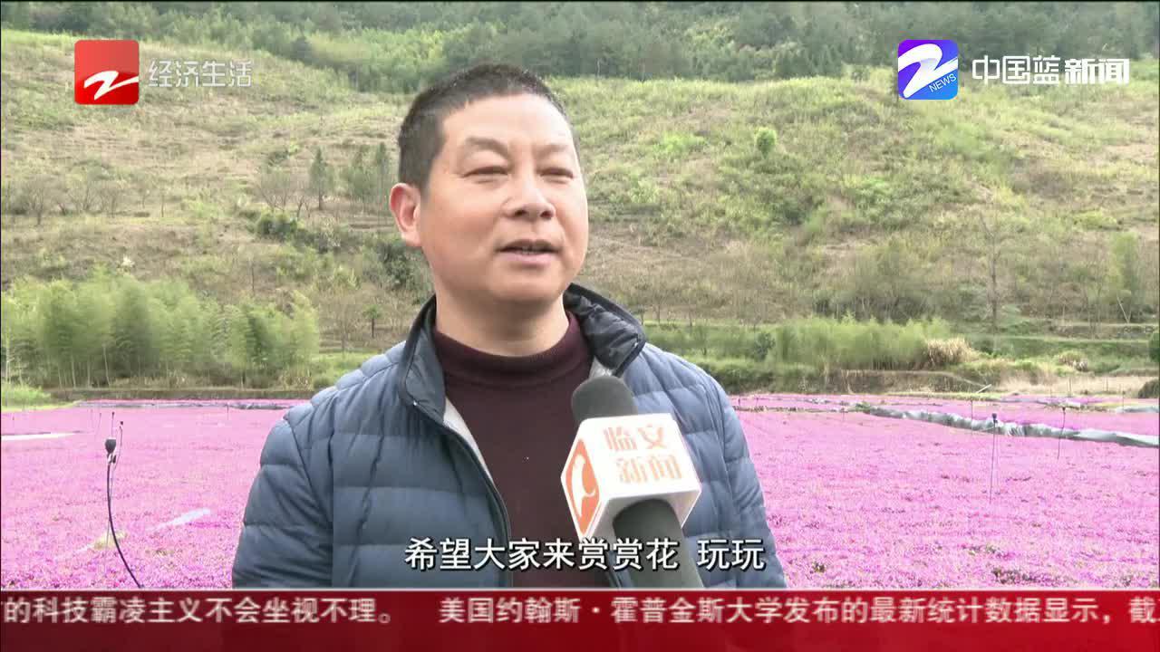 杭州临安芝樱花海进入最美观赏季 免费向游客开放