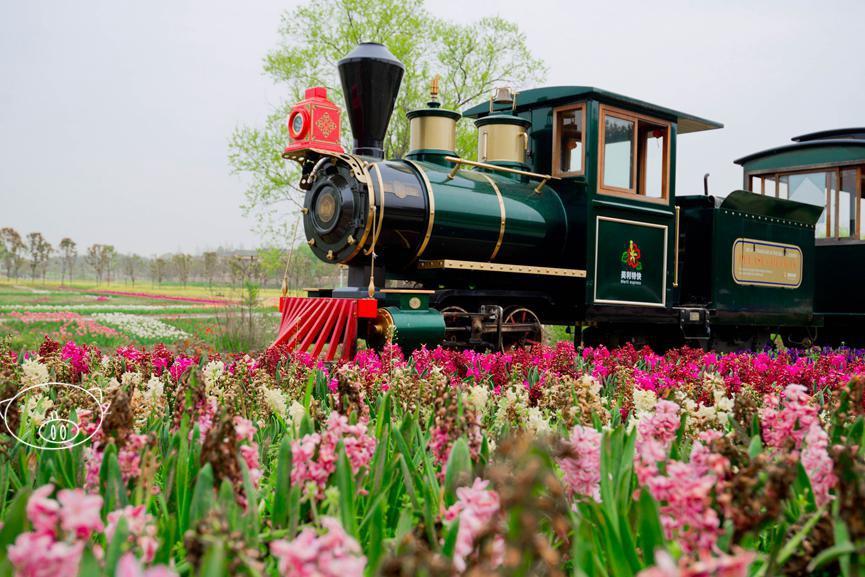 武汉|乘坐开往春天的小火车,穿梭于木兰花乡的七彩花海中