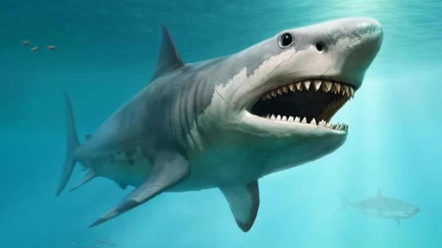 史前海洋顶级掠食者,战斗力媲美巨齿鲨,梅氏利维坦鲸你认识吗?