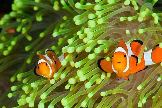 真美丽,水族馆最爱养的观赏鱼!