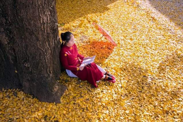 在这个充满凉意的季节,来腾冲银杏村进行一次温暖的旅行