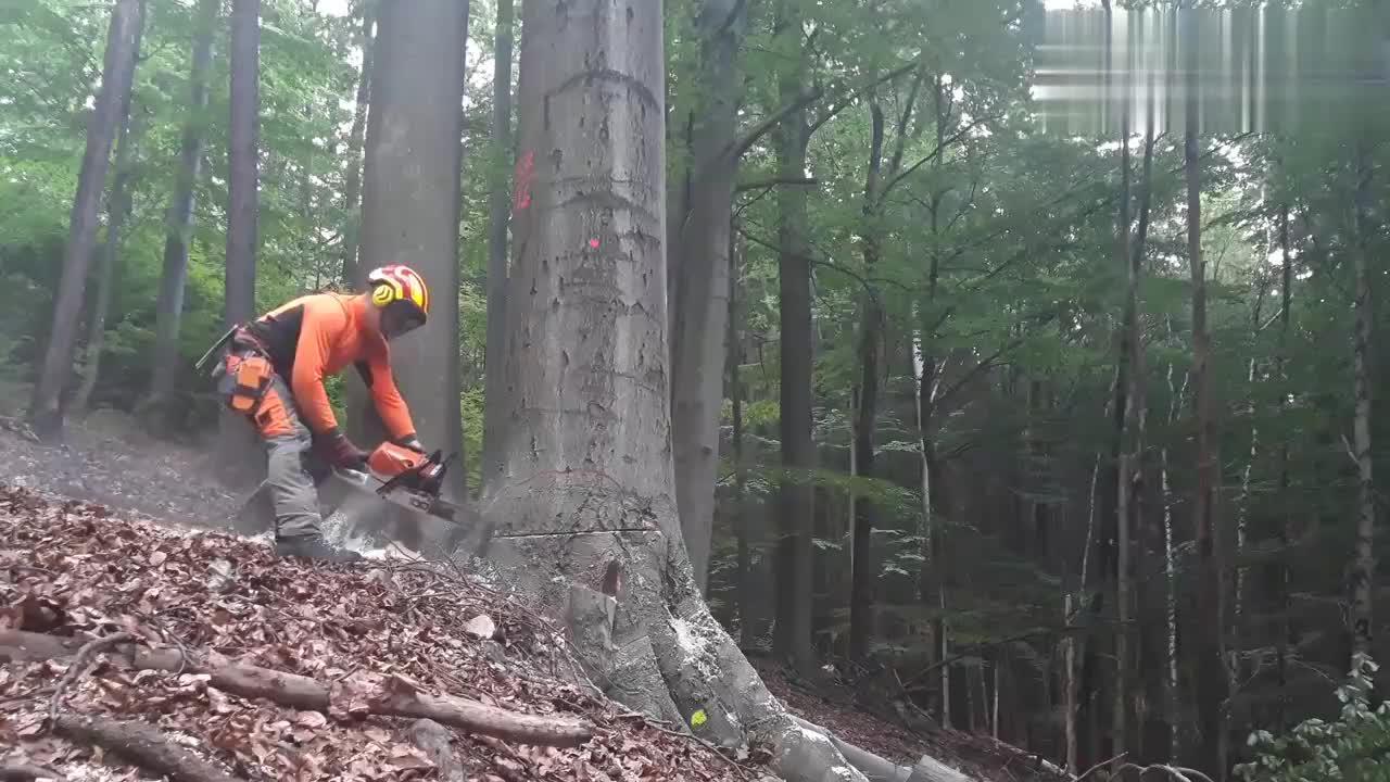 实拍国外小伙伐树的过程恕我直言这技术我服