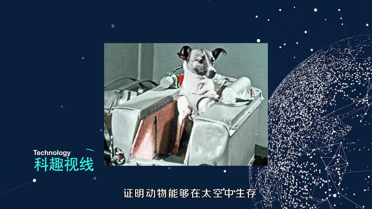 第一成功飞上太空的地球生命,是一只流浪狗,可惜被吓死了