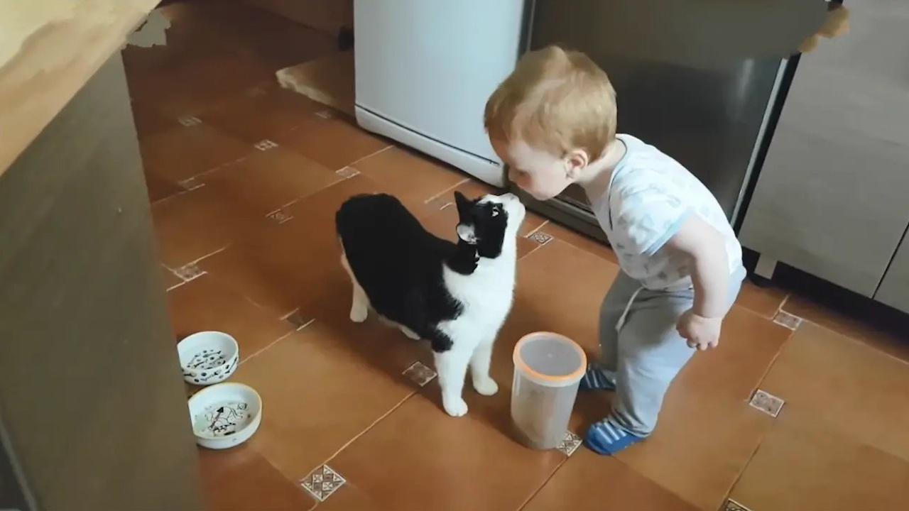 宝宝主动亲吻了一下猫咪,开心坏了!从此宝宝爱上了这种感觉