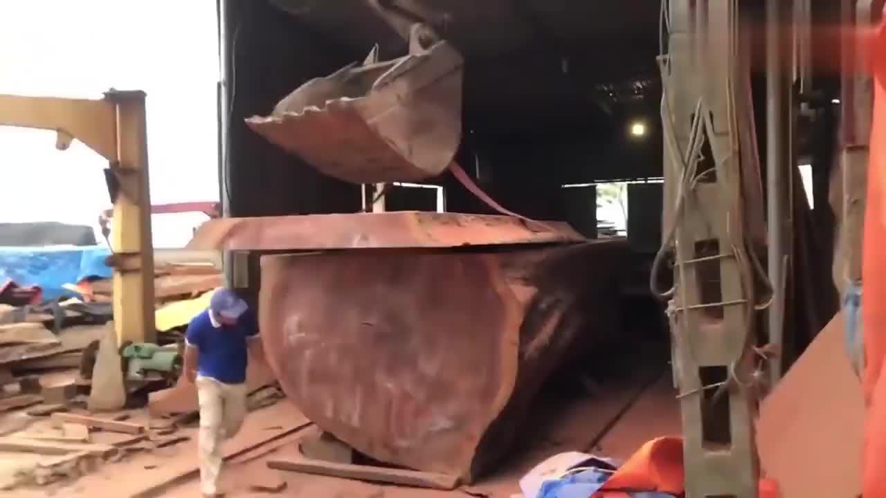 这么粗的大树,连切割一块板材都要用挖掘机吊,厉害了!