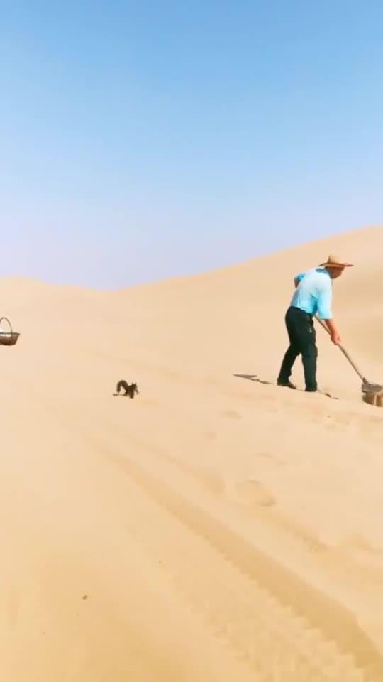 大哥沙漠淘金,用纳米过滤网筛,一天能捡两个戒指