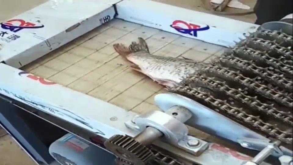 以后切鱼不用刀,这机器5秒切成段,是很轻松的事情!