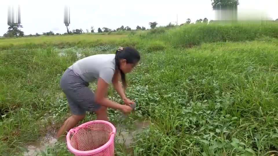 农村美女在田野抓鱼,只要姑娘一出手,这里的野生鱼一条也别想跑