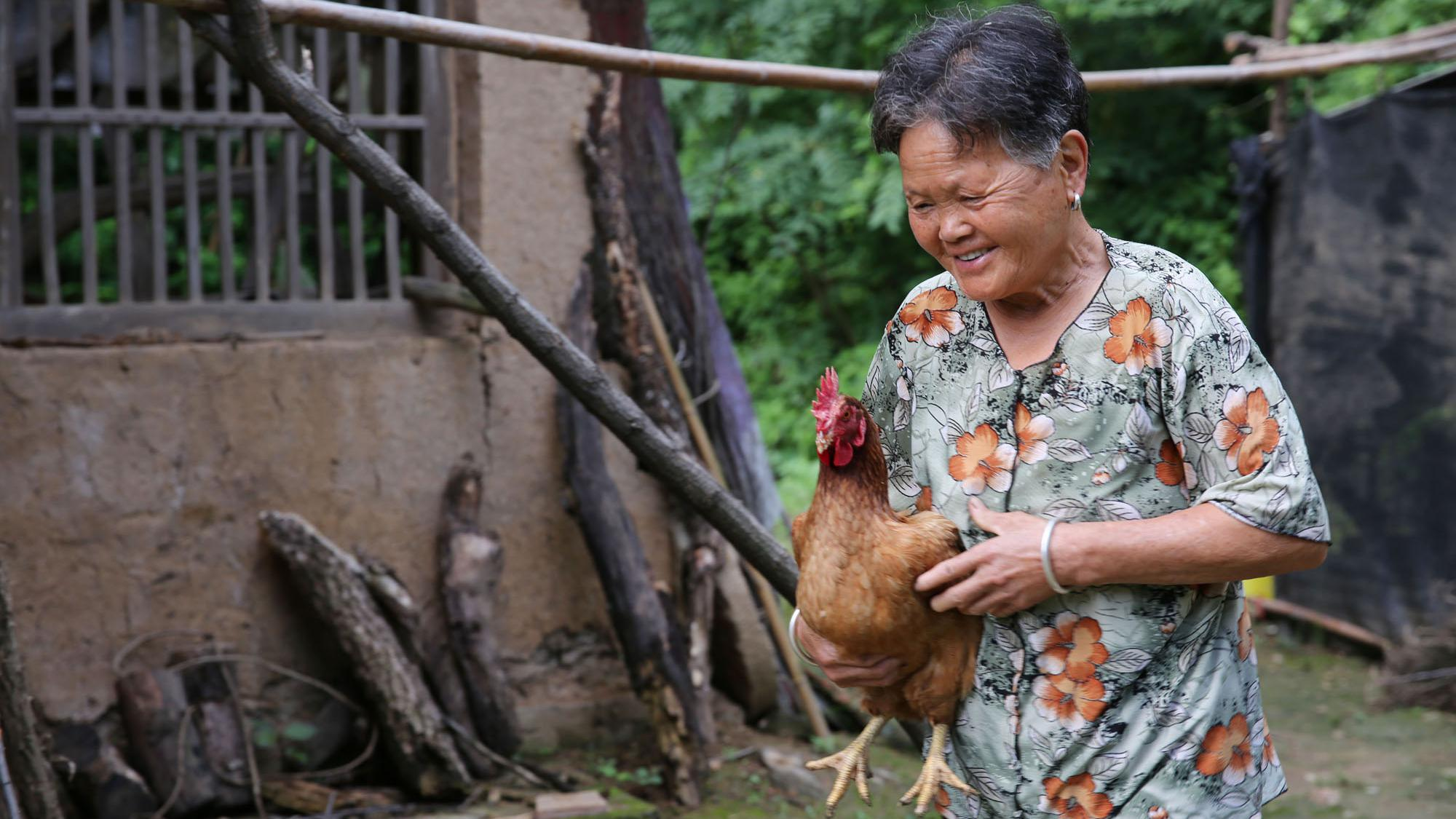 秦岭大山里的生活:76岁留守奶奶卖掉4只老母鸡,想买几只小鸡