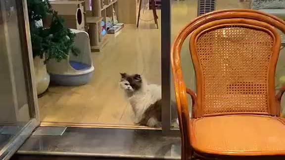 喵星人:你看什么看呢?没有看到斜刘海的猫吗?我是一只社会猫咪
