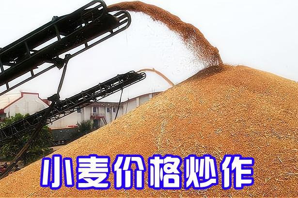 """小麦将大量收获上市,谁在""""炒作""""小麦价格?今年小麦多钱一斤?"""