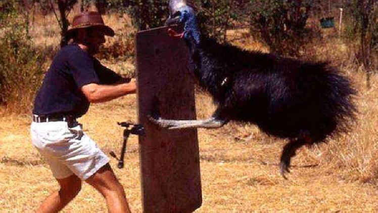 """地球上""""最凶""""的鸟类,爪子就像匕首一样锋利,猎杀过人类"""